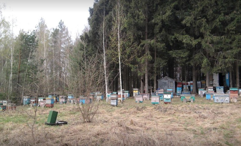 Книга Жизнь среди пчёл Николая Новикова