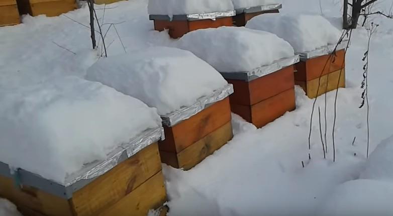 Приметы про пчел