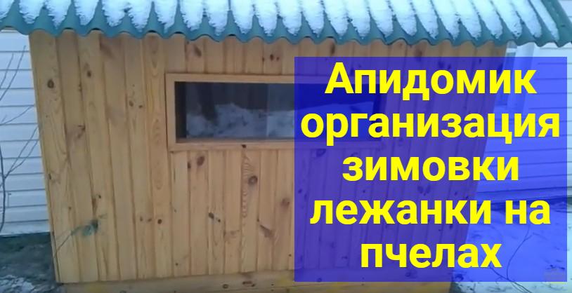 апидомик фото видео