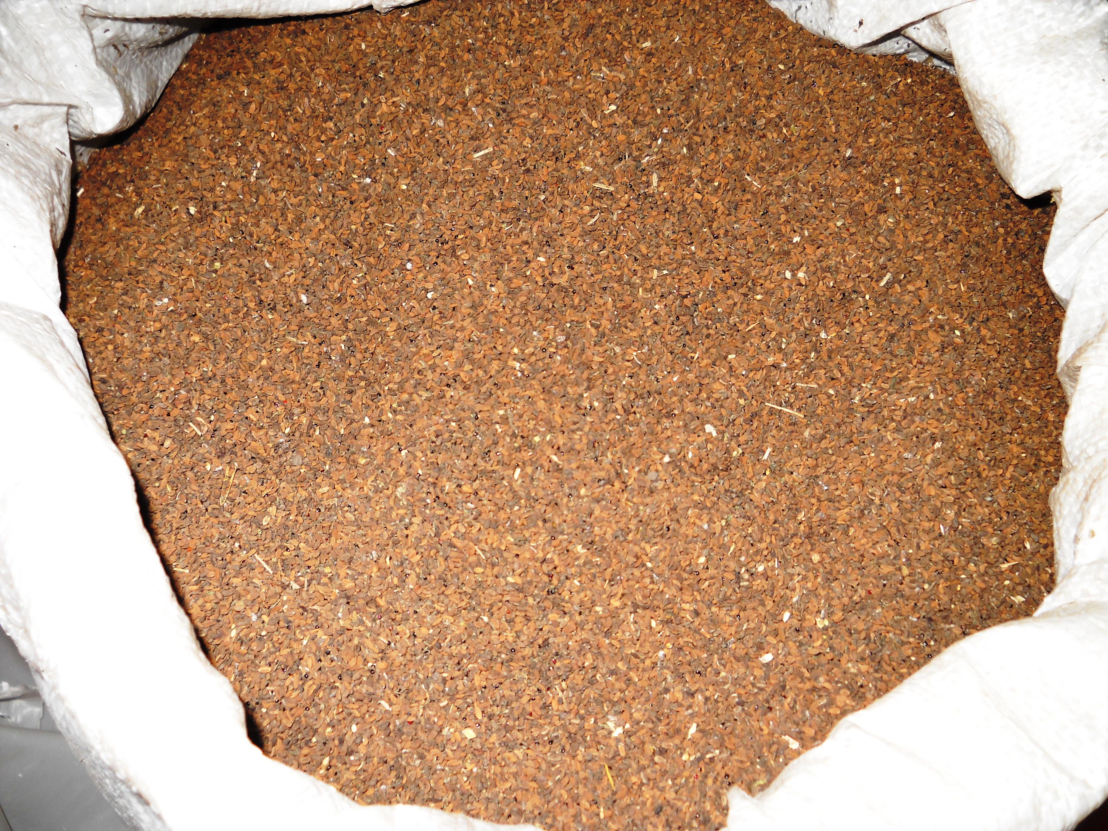 Продам насіння медоносу фацелія пижмолиста по пошті