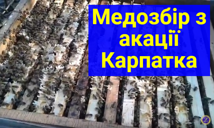 пчелопитомники украины