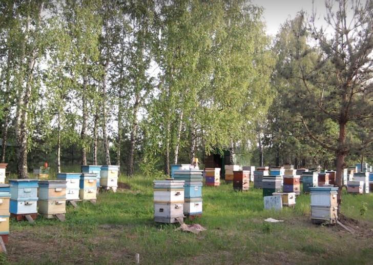книга Жизнь среди пчёл Николай Новиков