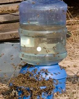 Соль пчелам нужна ли она