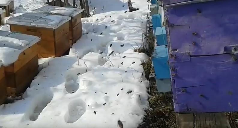 Весенний облет пчел снял несколько видео