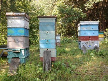 Ульи для пчел рамки и корпуса