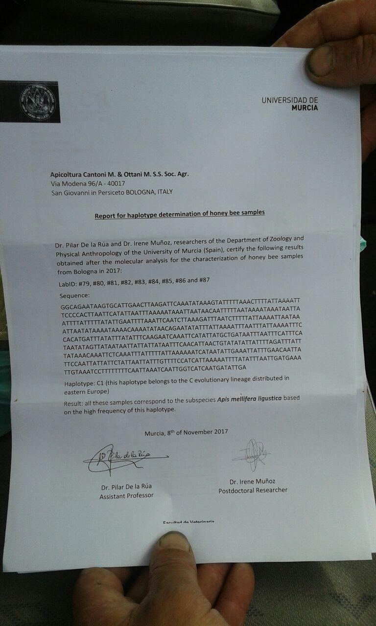 кордован 117 Лигустика генетический анализ
