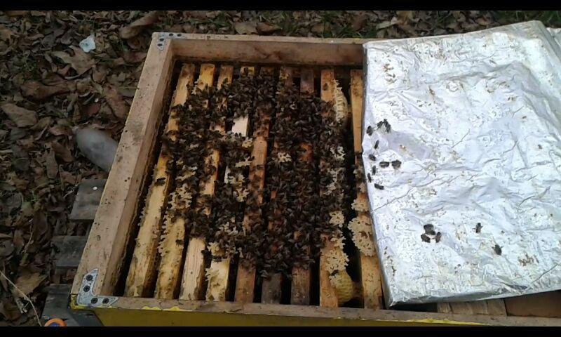 Клуб пчел