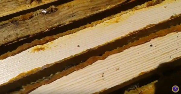 натуральный прополис в улье пчел