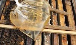 тренировка или Дрессировка пчел