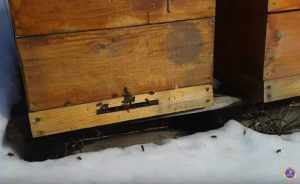 Как сохранить пчелу