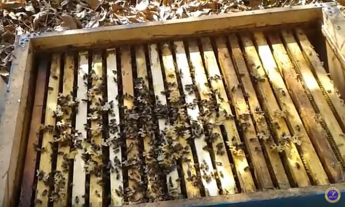 расплод у пчел зимой