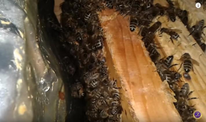 Купити Зимувалі бджоломатки продаж
