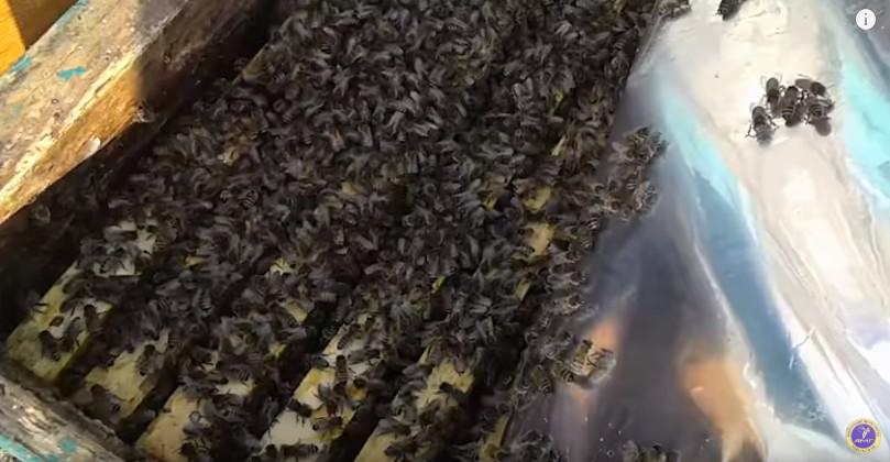 Пчелопакеты в Украине