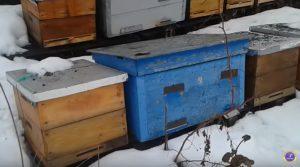 Преимущества зимовки пчел на воле