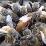 Бджоли-приносять-до-500-млрд-в-світову-економіку
