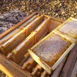 Продукти Бджільництва з пасіки