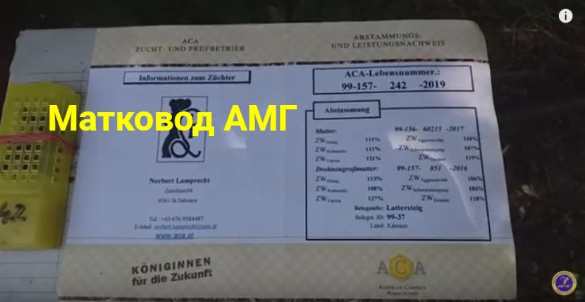 Паспорт матки Австрійська Карніка Лампрехт