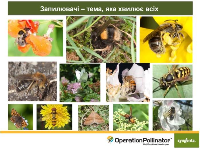 Дикі бджоли