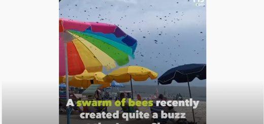 Рій Бджіл на пляжі в США