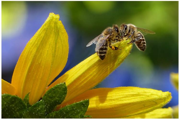 картинки мед и пчелы прикольные