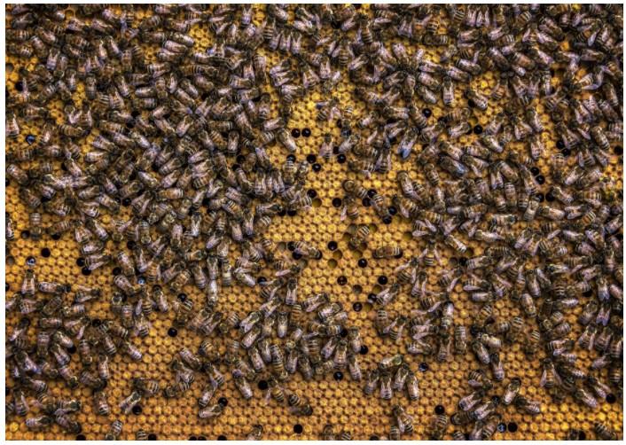 прикольные картинки пчел