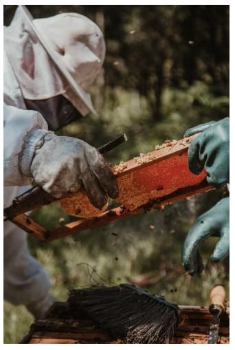 фотография пчеловоды