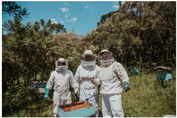 прикольные картинки пчелыприкольные картинки пчелы
