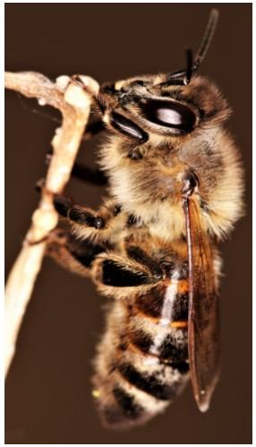 прикольні фотографії бджіл
