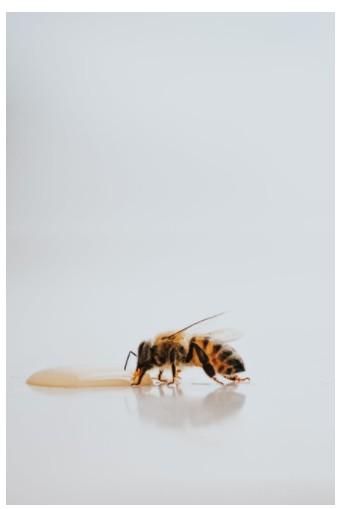 бджола прикольні картинки