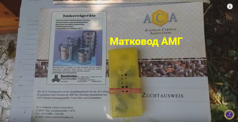 австрійська карніка, паспорт бджоломатки, австрійский паспорт матки, матки из австрии
