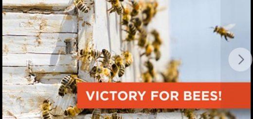 заборона пестицидів на основі сульфоксафлору, заборона сульфоксафлору, Перемога на користь пасічників та збереження бджіл у США.