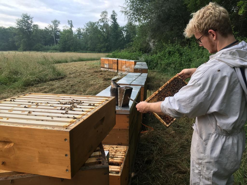 робота бджільництво за кордоном, робота пасічником за кордоном, работа пчеловод за границей, работа на пасека за границей, работа с пчелами за границей, робота з бджолами за кордоном, робота на пасіці в германії, робота на пасіці в німеччині,