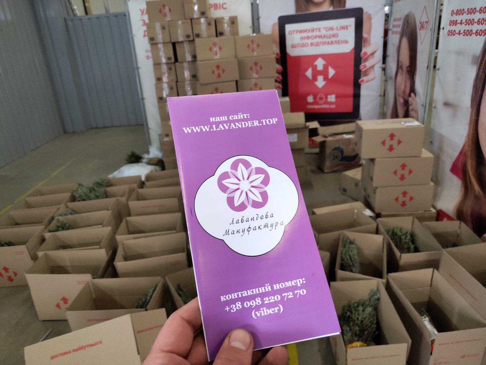 Продаж лаванди, де купити лаванду в Україні