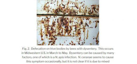 Нозематоз Бджіл, нозема, нозема апіс, нозема церане, нозематоз пчел, нозема апис, нозема церана, ноземоз, Nozema cerenae, Nozema, cerenae, apis,