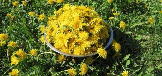 мед з кульбаби рецепт